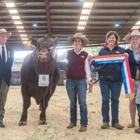 Senior Champion Bull - Goondoola Never Forget N18