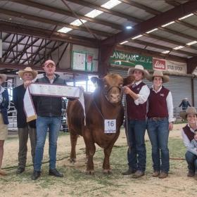 Grand Champion Bull - Goondoola Nebraska N26