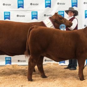 MELBOURNE Senior and Grand Champion Cow - Black Diamond 35X Mistress M501