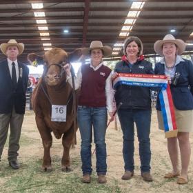 Junior Champion Bull - Goondoola Nebraska N26